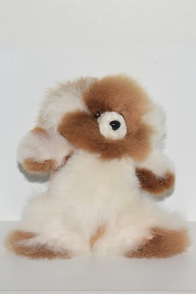 white & brown small teddy