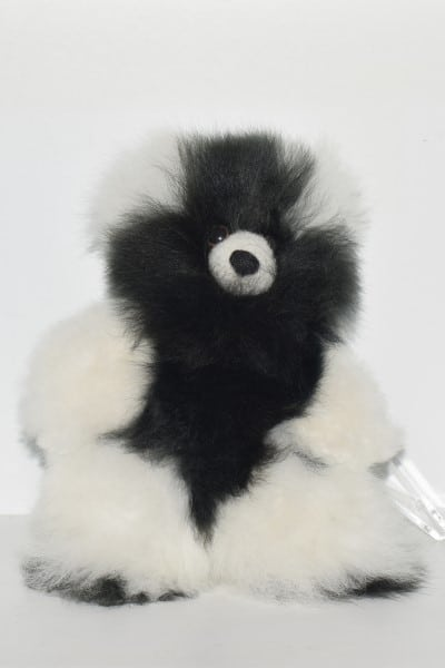 black & white small teddy