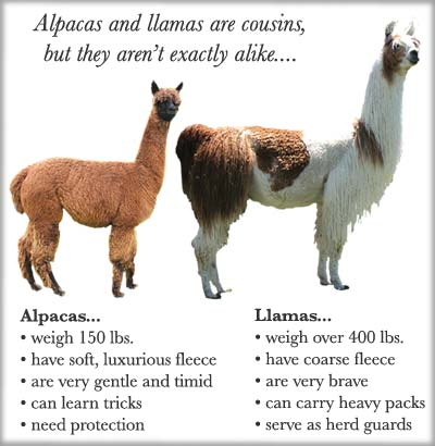 Alpaca & Llama